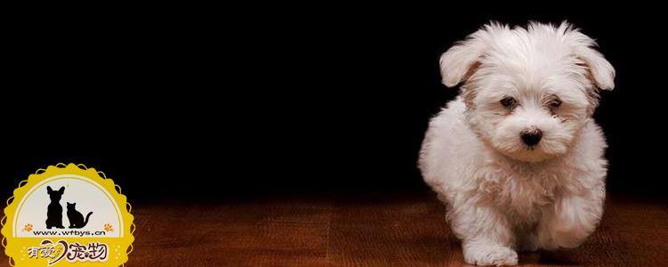 狗狗喂生肉吃会怎么样 可不可以给狗狗喂生肉