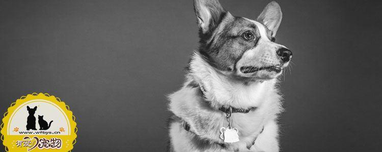 导致狗死亡的疾病有哪些 为了更长的陪伴要避免这些疾病