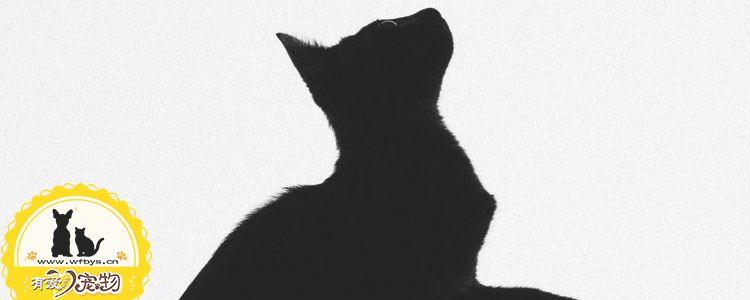 猫瘟死亡征兆 猫瘟临死前有哪些表现