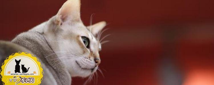 被家猫抓伤出血有事吗 被家猫抓伤出血怎么办