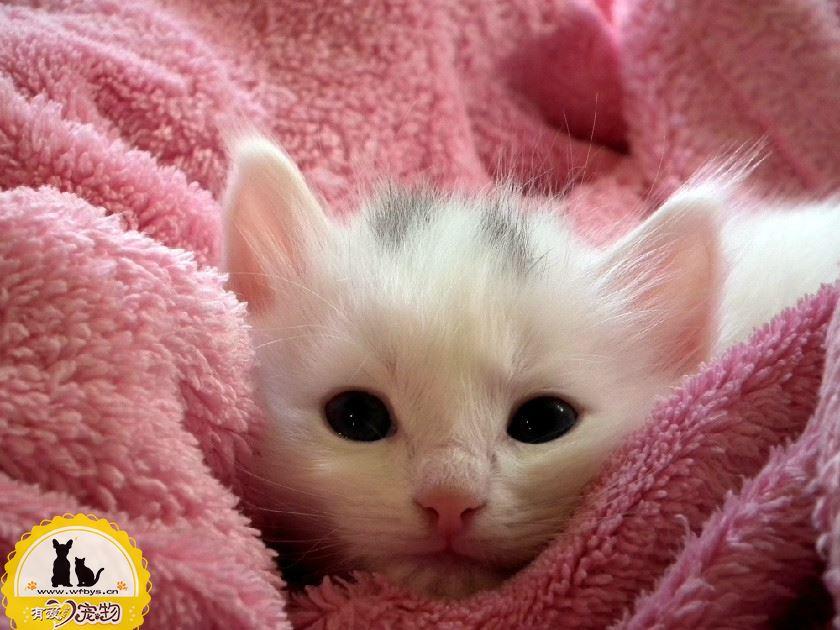 猫鼻头干燥原因 猫鼻头干燥如何解决