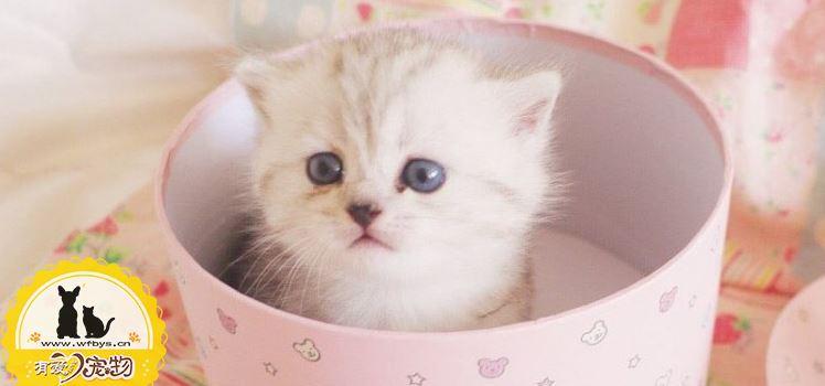 猫发烧摸哪里 猫发烧摸耳朵吗