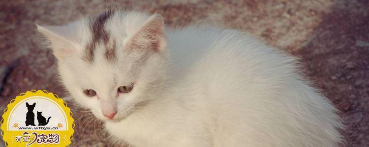被三个月的小猫咬出血 被幼猫咬伤后怎么办