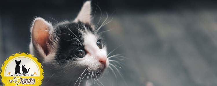 猫需要打什么疫苗 猫打疫苗后要注意什么
