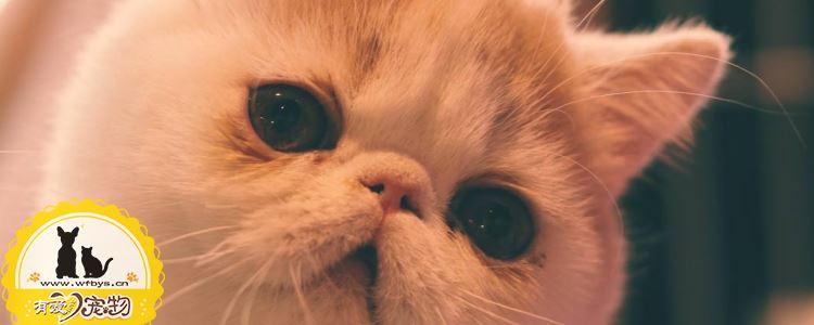 被打过疫苗的猫抓伤渗了一点点血 被猫抓伤严重吗