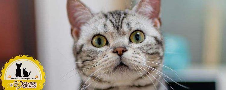猫感冒了怎么办 猫感冒的症状是什么