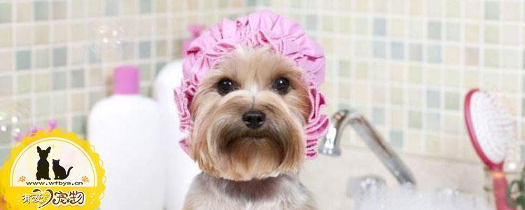 狗狗洗澡不吹干可以吗 不可以!