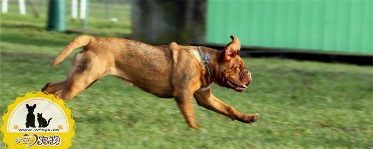 狗狗不听指令是怎么回事 是狗狗的错还是主人的错