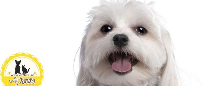 狗狗刚到家需要做什么 别让你的错误习惯影响了狗狗