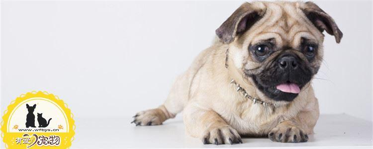 狗狗流口水怎么回事 狗狗流口水的原因是什么