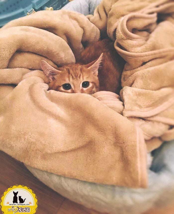 猫感冒一般几天自愈