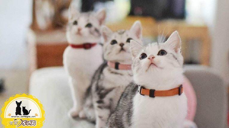 猫发情吃什么药管用 随意用药小心得不偿失