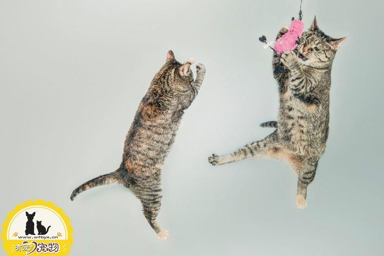 猫吃维生素b用量