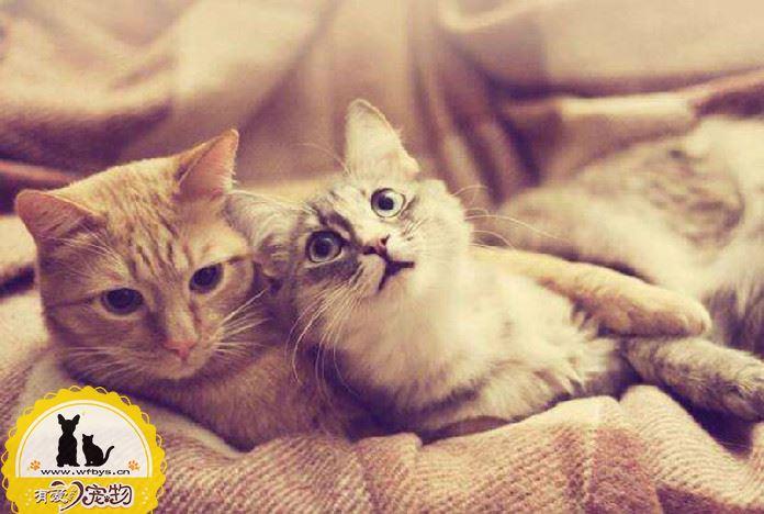 猫咪呕吐是什么原因 造成猫咪呕吐的常见原因