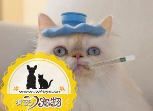 猫感冒怎么治疗