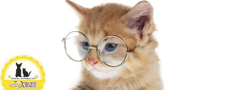 猫流眼泪怎么办 猫流眼泪是因为什么原因