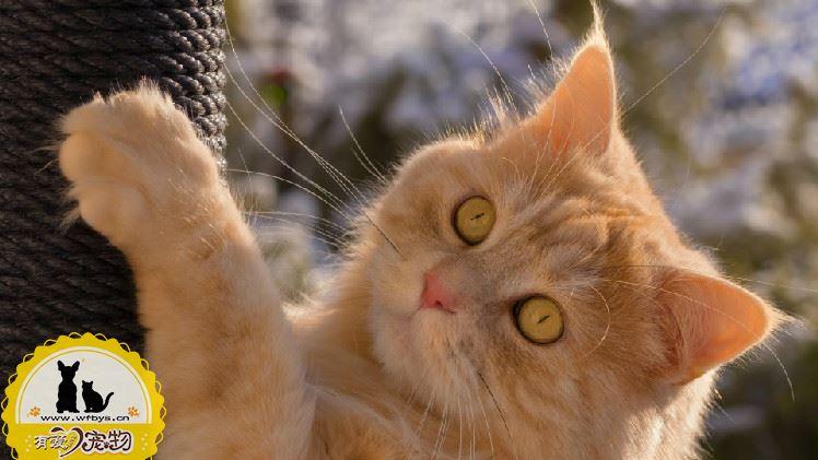 被两个月小猫抓伤出血要打针吗