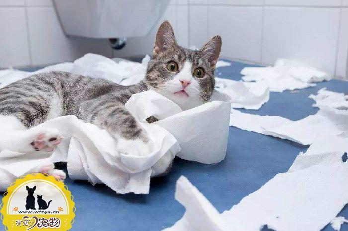 猫呕吐黄水怎么办 如何解决猫吐黄水