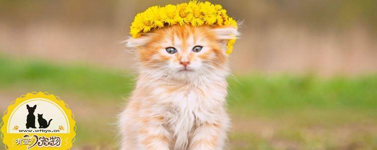 猫为什么会呕吐 猫呕吐有什么原因