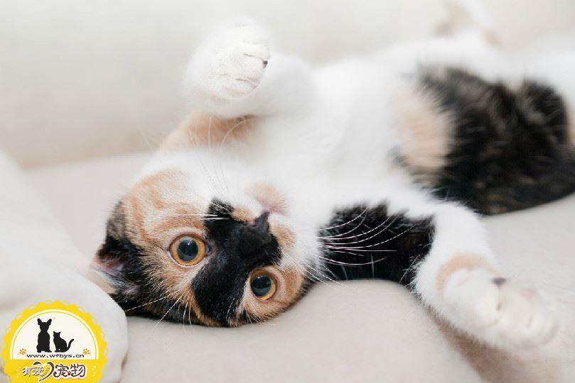 猫鼻子上有黑点是为什么 猫鼻子上有黑点症状分析