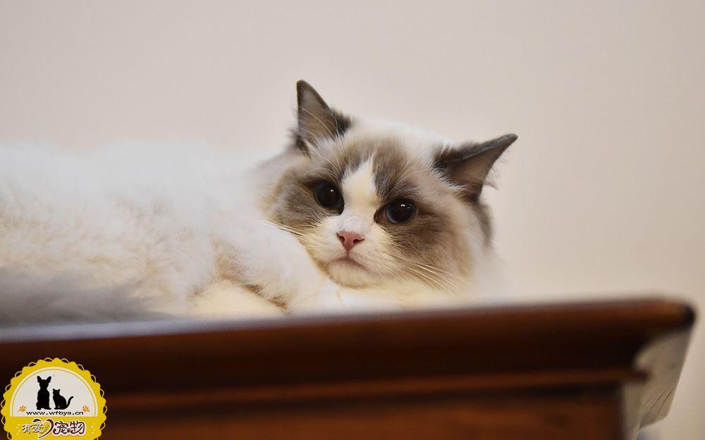 猫发情期打疫苗有影响吗 打疫苗别碰这几大禁忌
