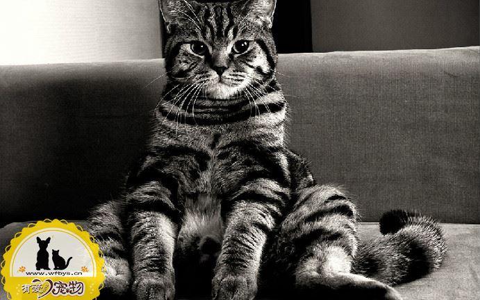 猫绝育的好处 适龄绝育是必要