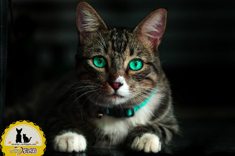 猫得猫瘟的症状