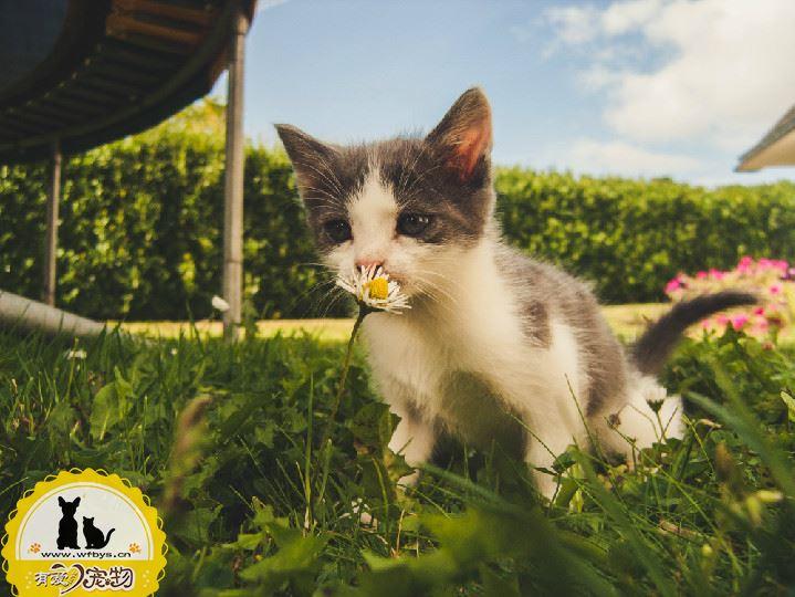 打疫苗的猫不容易得猫瘟吗