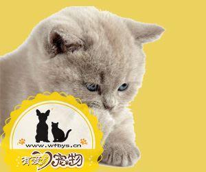 3个月的猫发烧能自愈吗