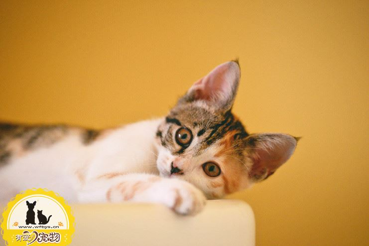 猫鼻支要死的征兆