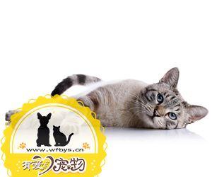 猫毛囊炎怎么治疗