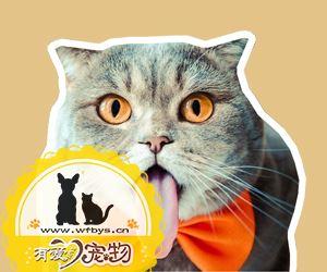 猫呕吐怎么办