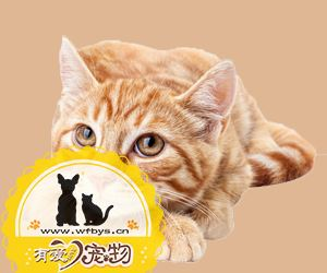 猫绦虫怎么治