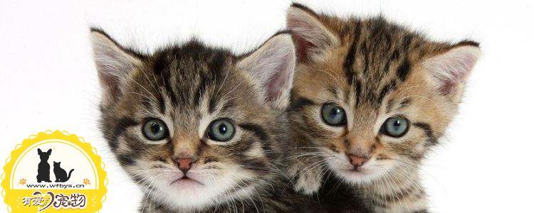 幼猫出生后多久存在免疫缺陷  幼猫免疫缺陷原因