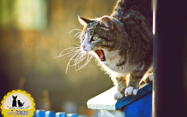 被猫抓伤怎么办 视情况而定是否打疫苗