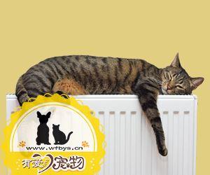 猫传染性腹膜炎症状介绍