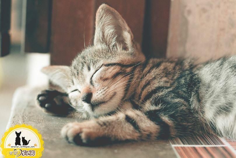 出生2天小猫拉稀