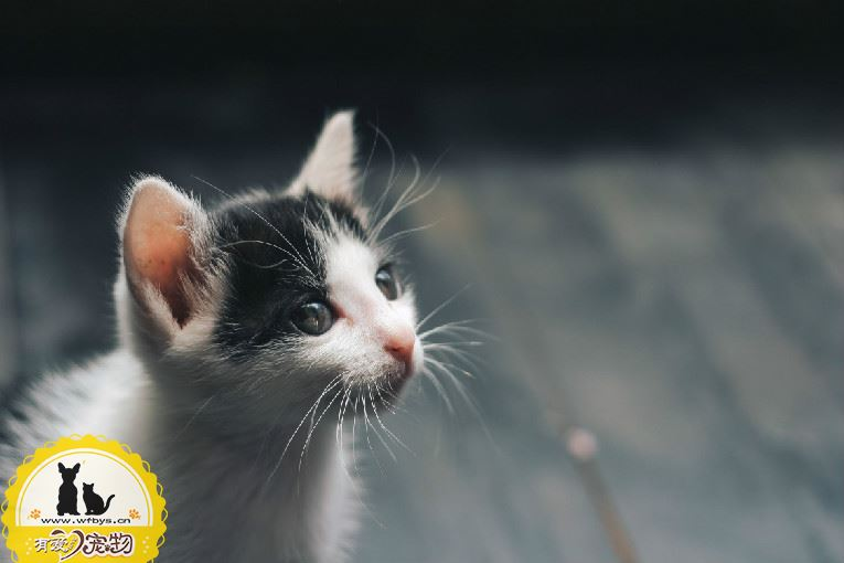 猫鼻子由粉变白 猫咪常见症状治疗