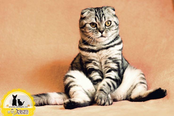 猫不打疫苗可以吗
