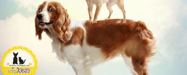 三个月的狗狗怎么养 这些问题你都该注意