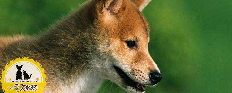 幼犬吃多少狗粮合适 别让压缩狗粮害了你的狗狗