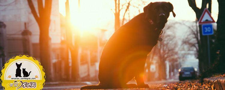狗狗便秘吃什么 狗狗不再便秘秘方食谱