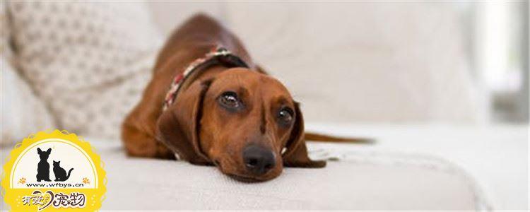 狗狗眼屎代表什么 狗狗眼屎多是怎么回事