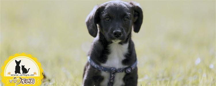 狗狗厌食是什么原因 你家的狗狗有出现厌食吗