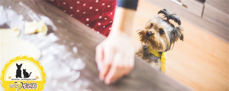 狗狗聪明的三大表现 你家的狗狗够聪明吗