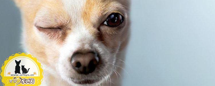 幼犬的狗粮怎么选择 狗粮有什么选择标准
