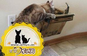 猫咪尿频是什么原因