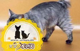 怎么训练肯尼亚猫不记仇 肯尼亚猫记仇解决办法