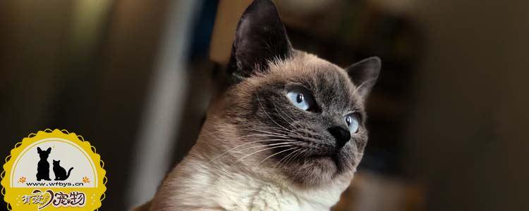 猫体外有什么寄生虫 体外寄生虫的种类