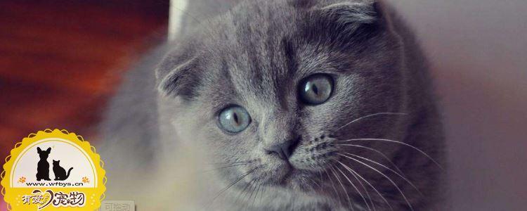 猫免疫缺陷综合症 猫免疫缺陷主人需要弄清楚!
